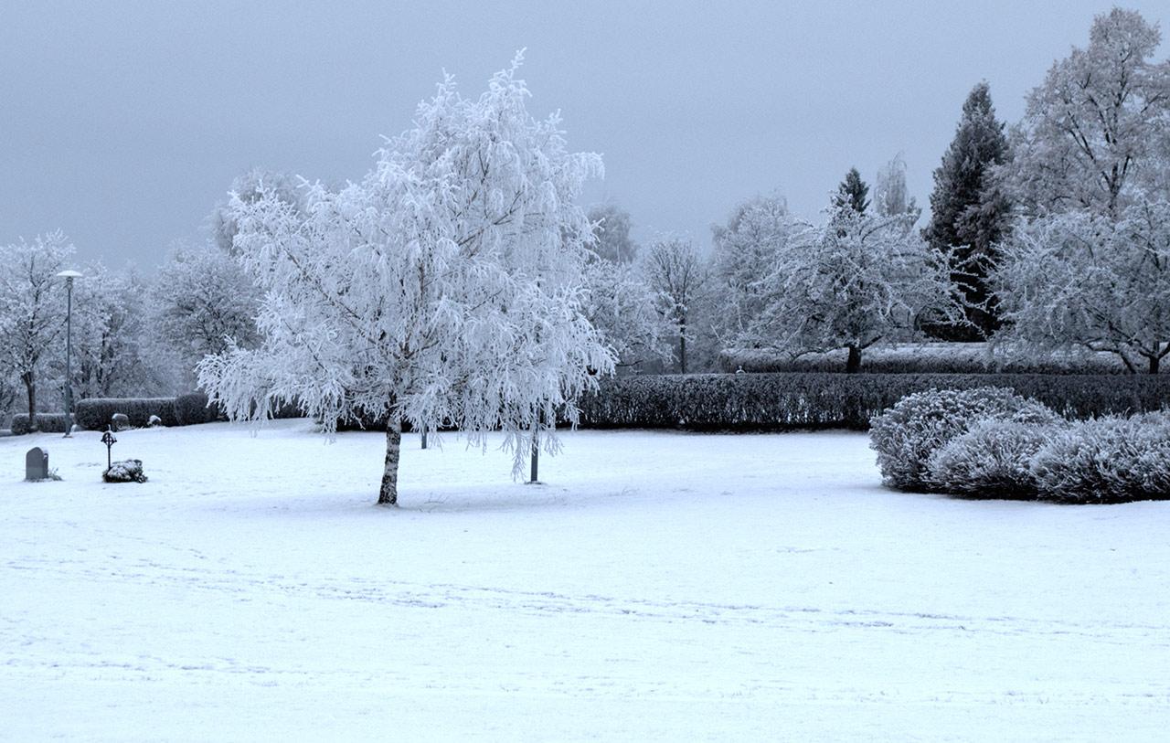 Frostigt träd på kyrkogården